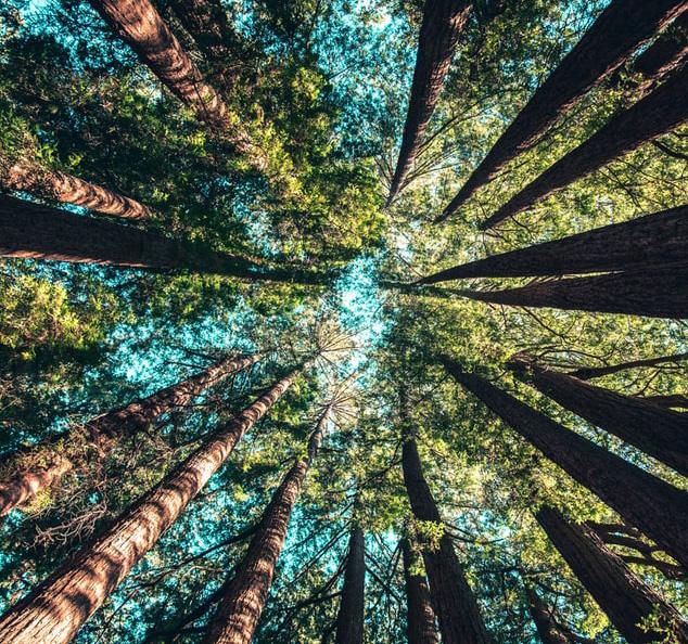 Madera sostenible